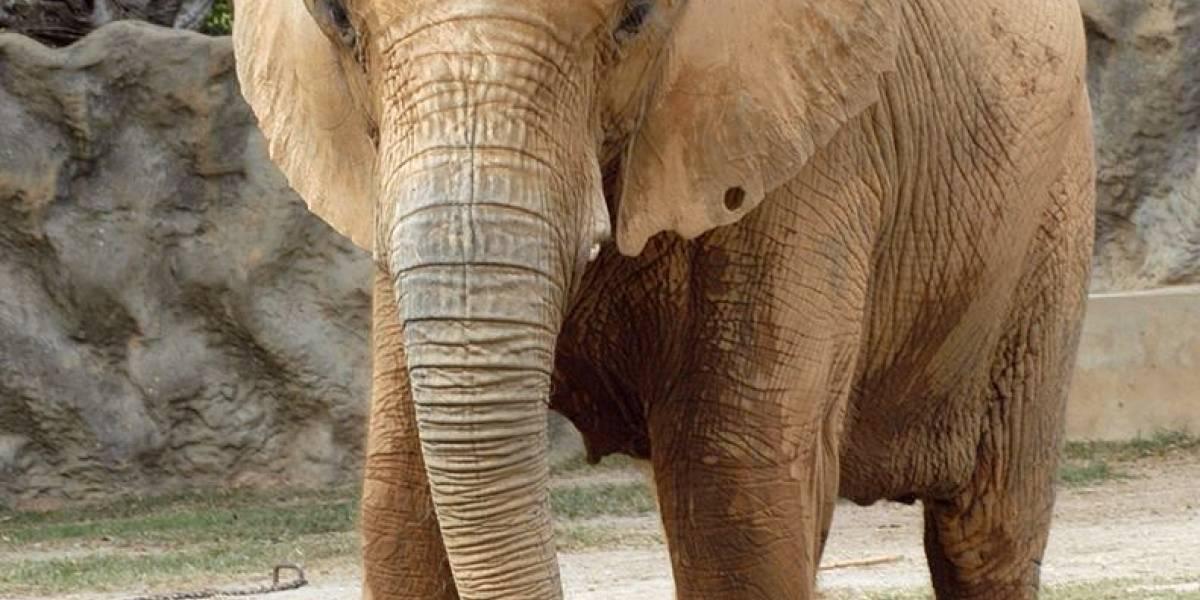 Organizaciones se unen para exigir el cierre definitivo del Zoológico de Puerto Rico