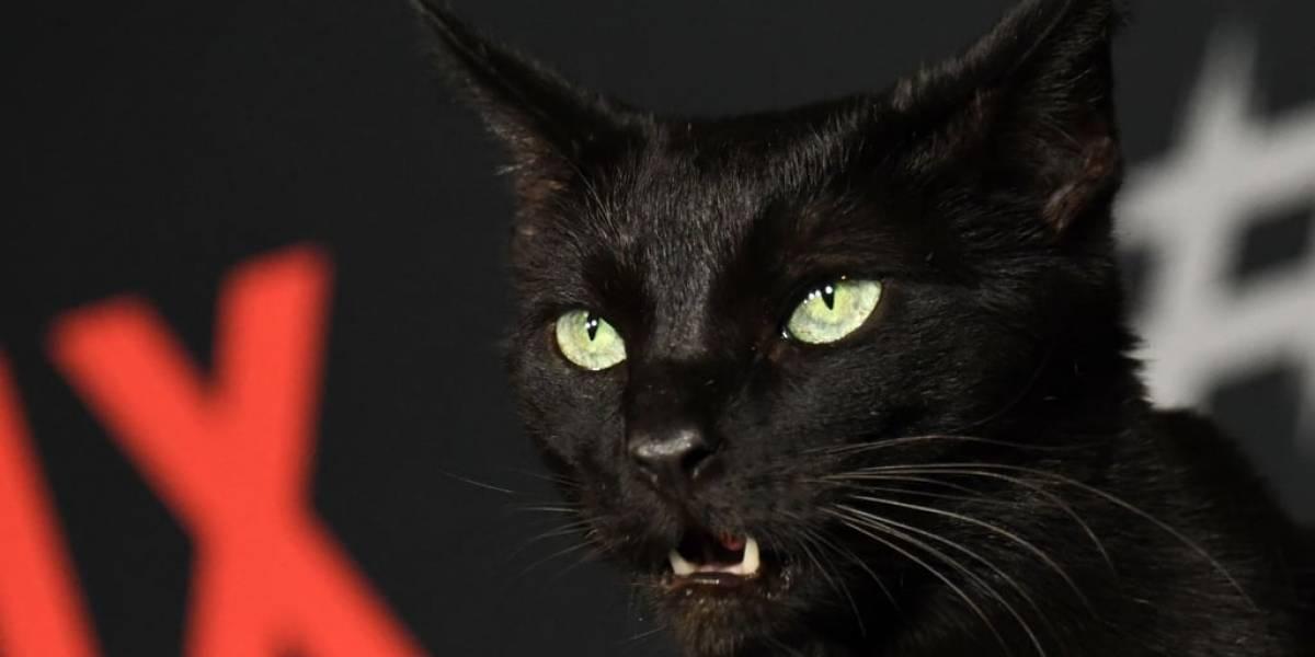 ¡Salem no habla! Las reacciones tras estreno de Sabrina en Netflix