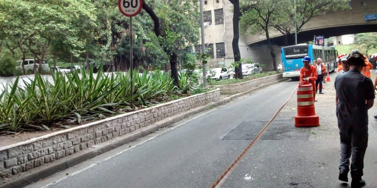 Programa municipal para plantio de 200 mil árvores em São Paulo emperra