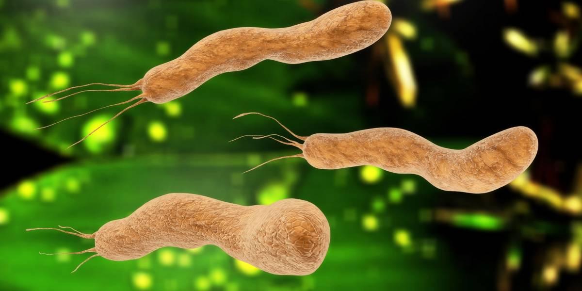 Helicobacter pylori: Síntomas y consecuencias