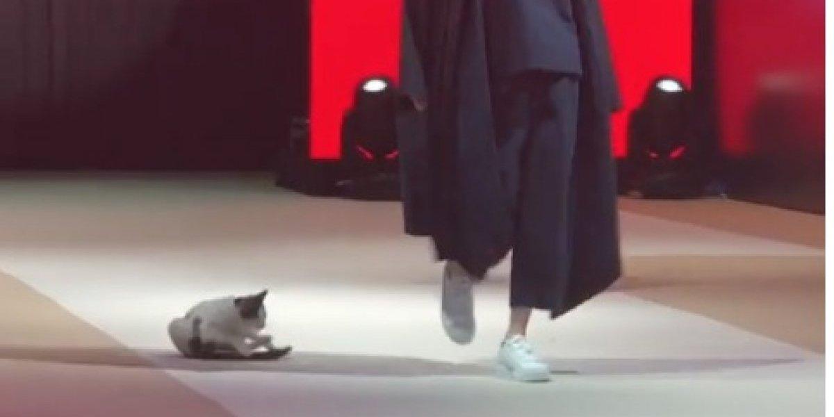 La estrella del espectáculo: tierno gatito se roba el protagonismo en desfile de moda y enamora a todos en Instagram