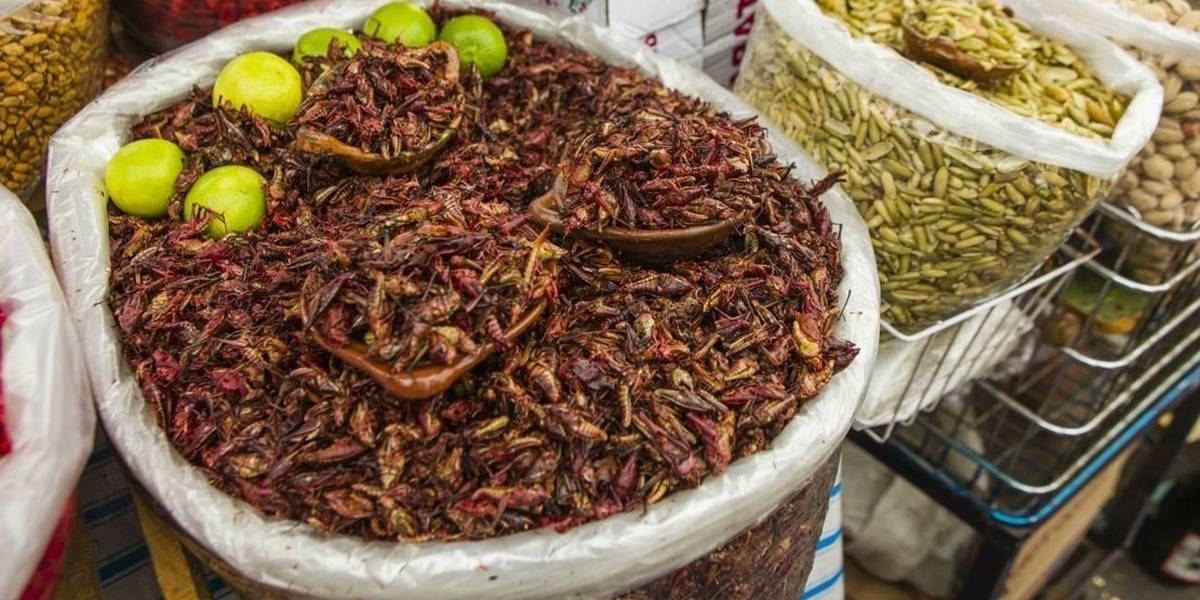 Universidad Nacional Autónoma de México recomienda comer grillos