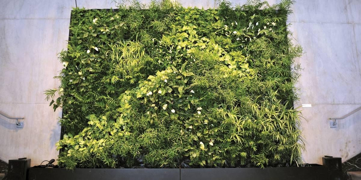 Jardines verticales, la solución verde a la falta de metros cuadrados