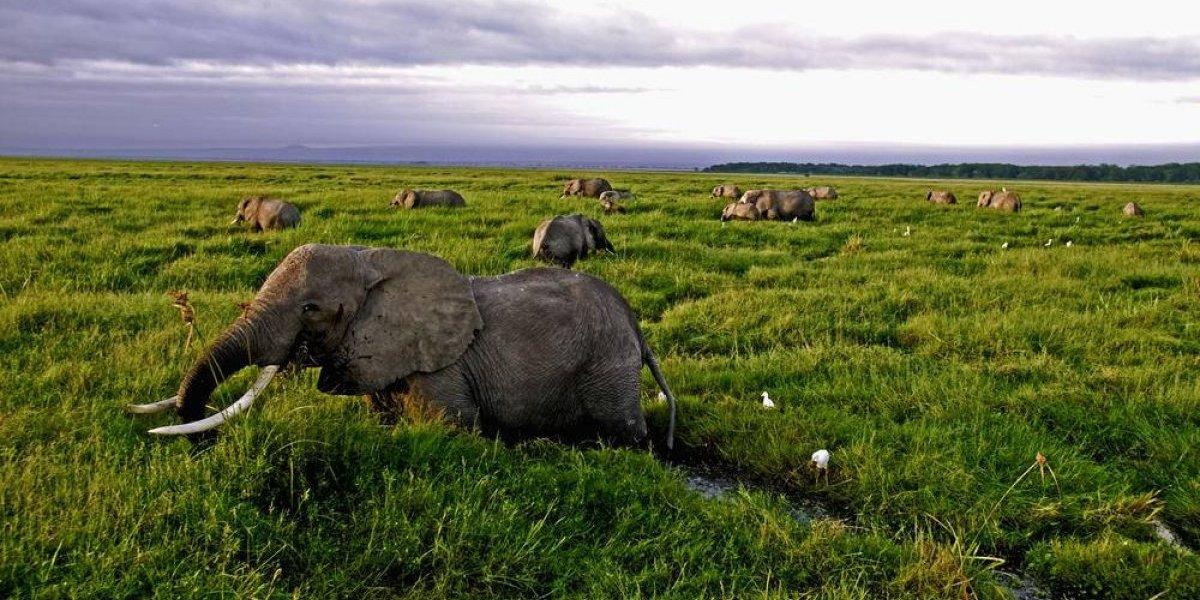 Población de animales vertebrados ha caído en un 60% en los últimos 44 años