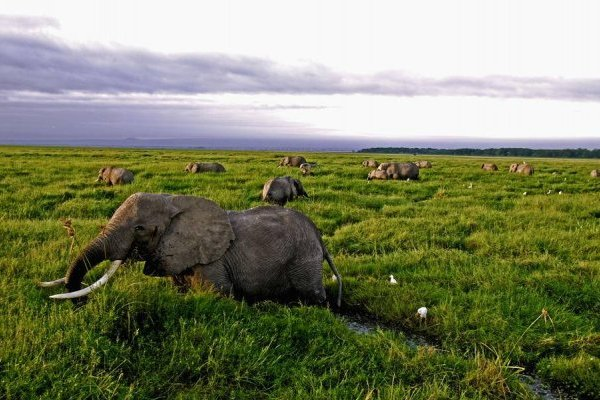 Autorizan el uso medicinal de huesos de tigres y cuernos de rinocerontes