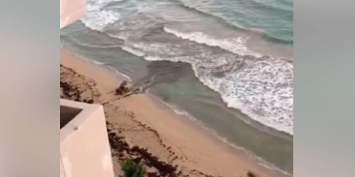 Descarga de aguas sucias en playa de Condado preocupa a residentes