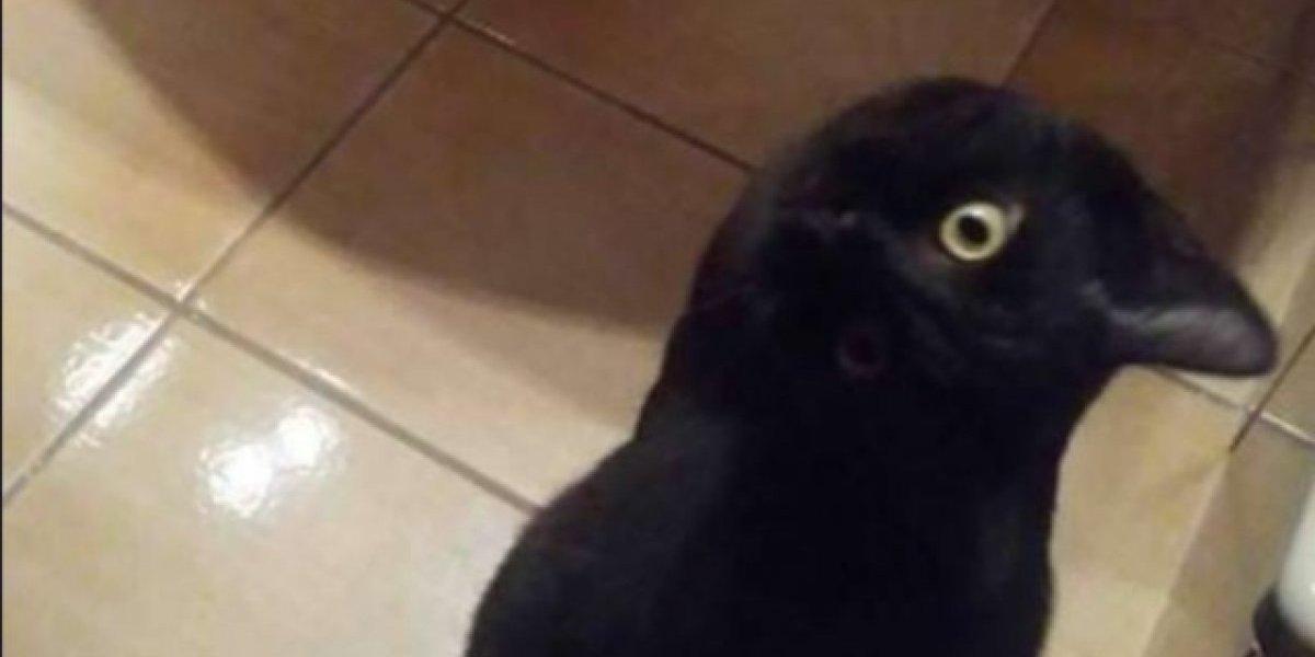 ¿Qué animal ves?: Nuevo desafío óptico enciende el debate y pone a pensar a los tuiteros