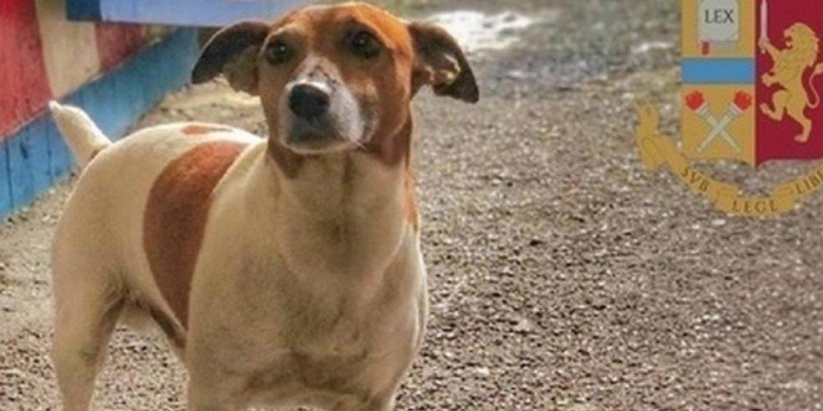 Tres millones de pesos por su cabeza: el tierno perro antidrogas que está amenazado de muerte por la mafia italiana