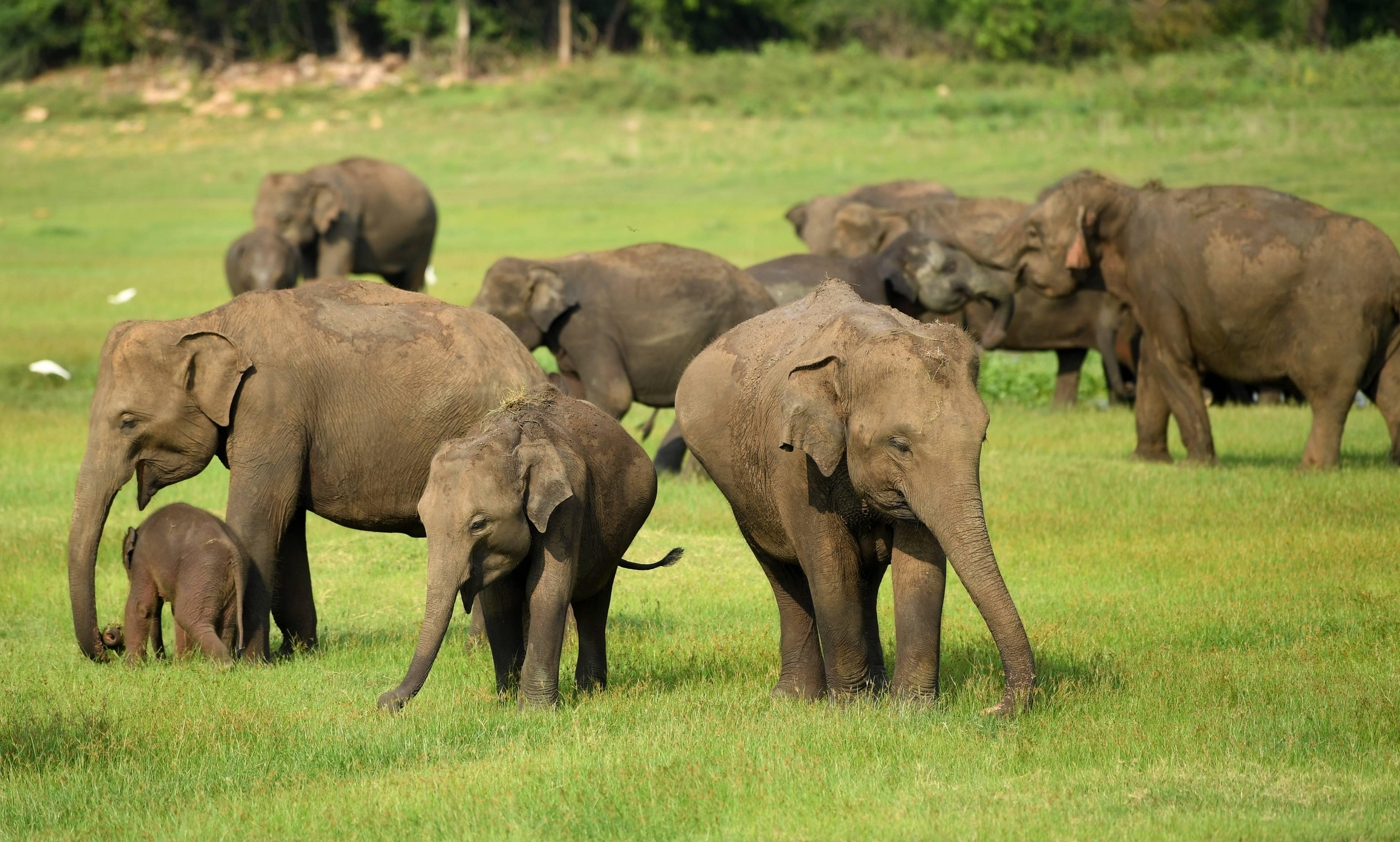 El 60% de los animales vertebrados del planeta se ha extinguido en los últimos 44 años