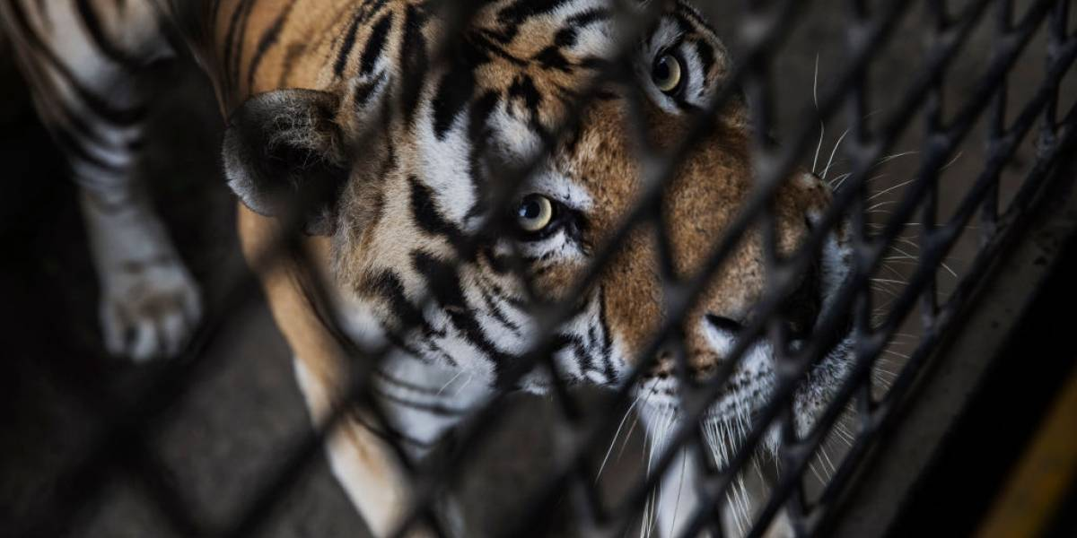 Desastre ambiental: el 60% de los animales vertebrados del planeta han desaparecido en los últimos 44 años