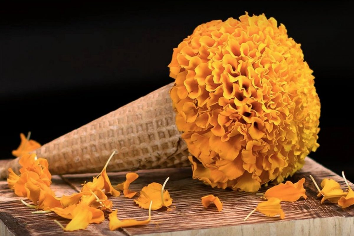 No te puedes perder el helado de cempasúchil Facebook: El Portal del Sabor