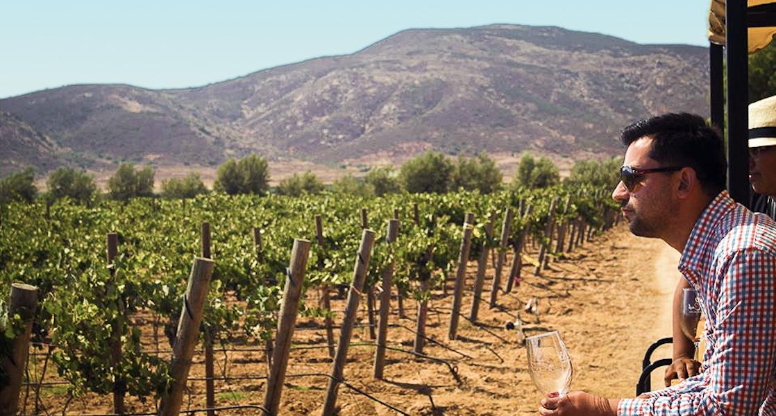 Esta ruta del vino, no puedes perdértela