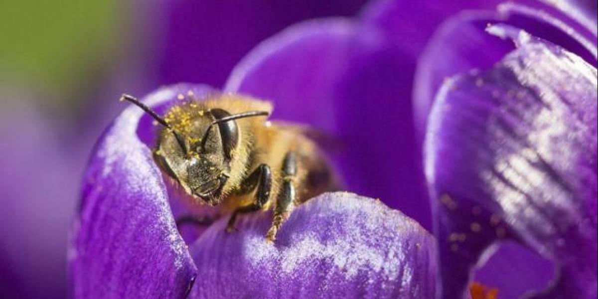 Así es como la IA y la nube se ponen al servicio de la conservación de las abejas