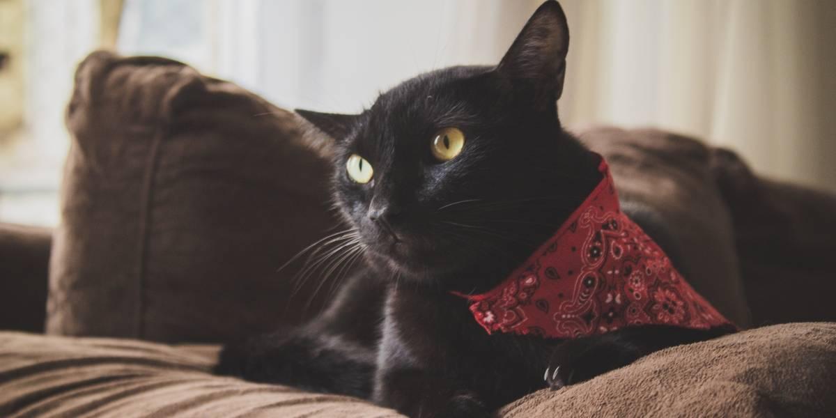 Halloween exige atenção aos gatos pretos, que correm risco de sofrer maus-tratos