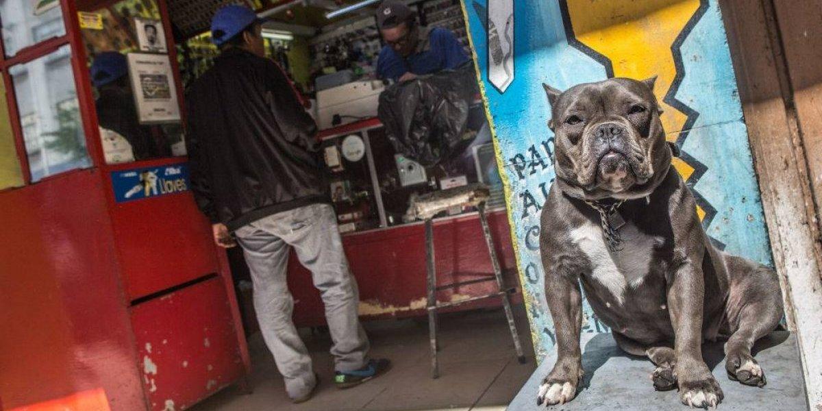 Diputado pide que mascotas hereden bienes de sus dueños