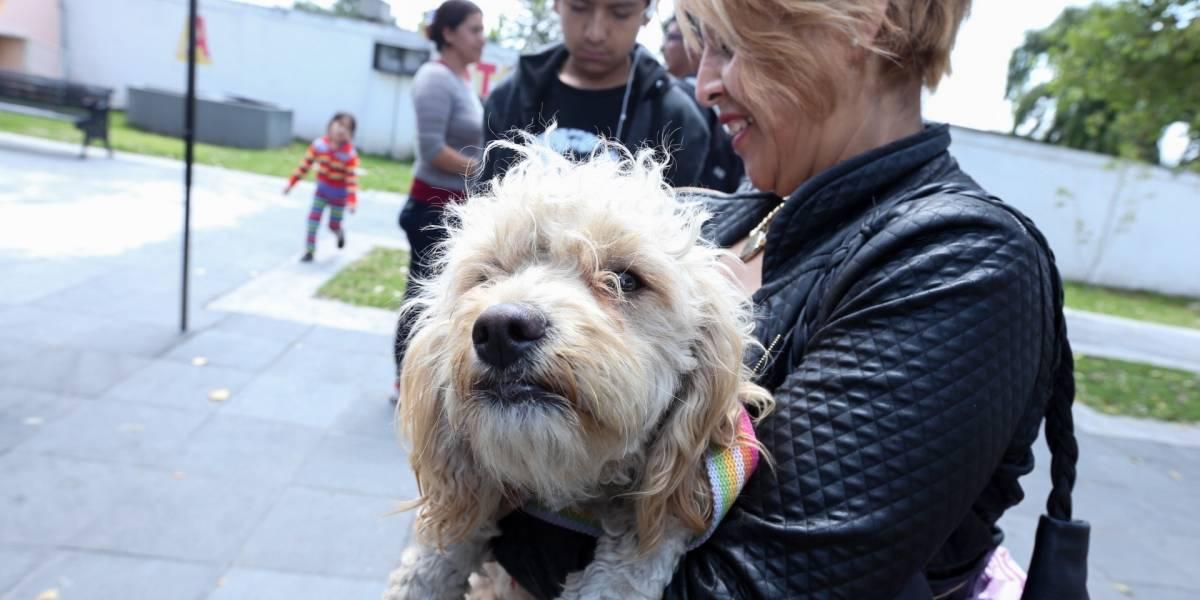 Proponen arresto y multa para personas que mutilen a mascotas por estética