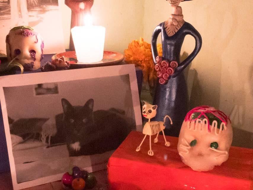 Buscan que el 3 de noviembre sea el día para conmemorar a las mascotas muertas