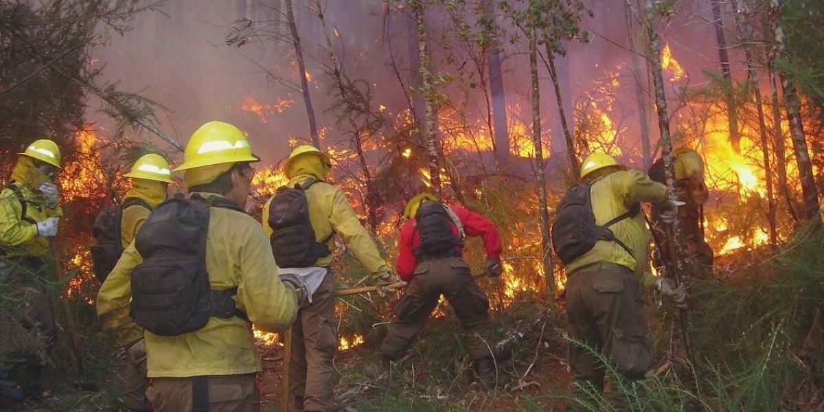 Conaf se prepara para periodo alto de incendios forestales