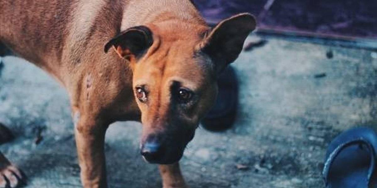 ¡Fuertes imágenes! Por culpa de cazador 12 perros mueren cayendo de un precipicio