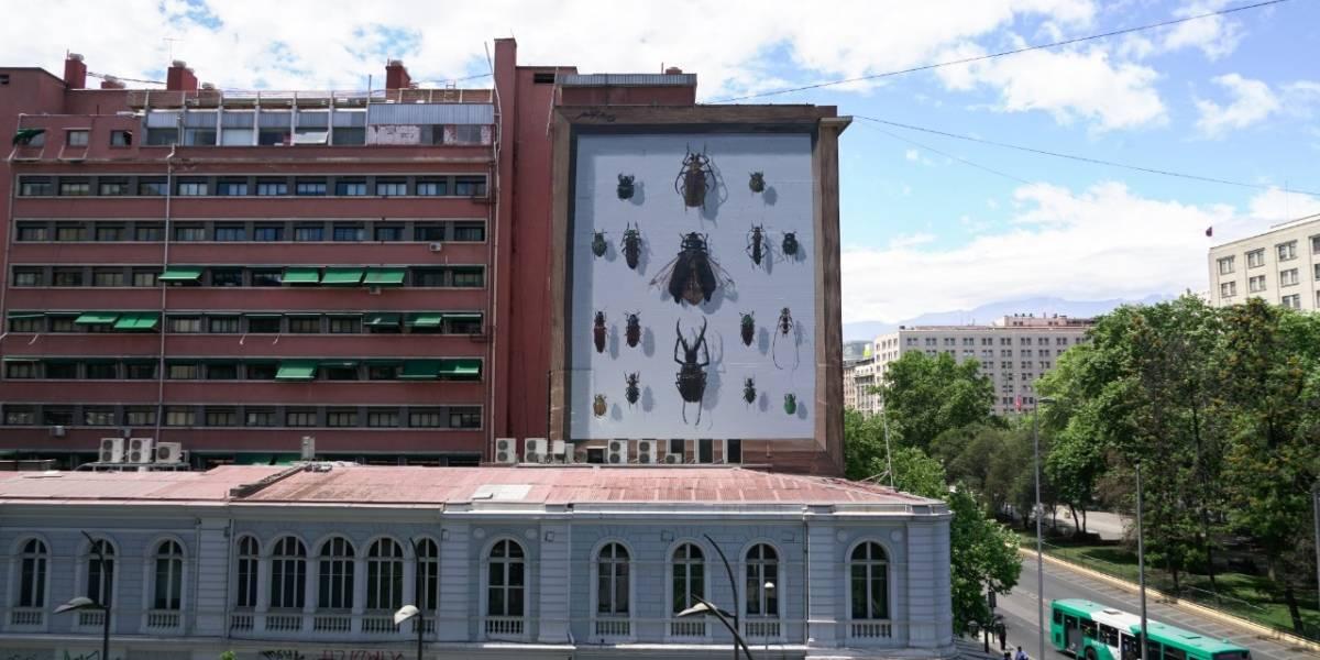 """El pololo, el escarabajo volador y otros insectos gigantes """"atacan"""" a todo color en el centro de Santiago"""