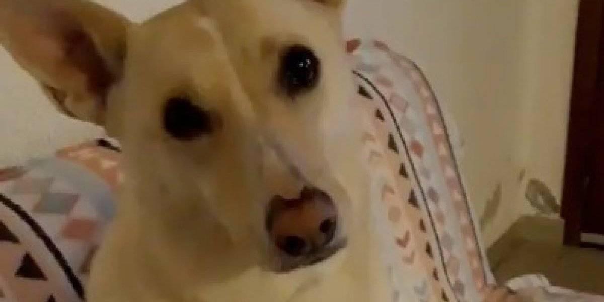 Perro tratando de entender las preguntas de su dueño desata un reto viral en redes