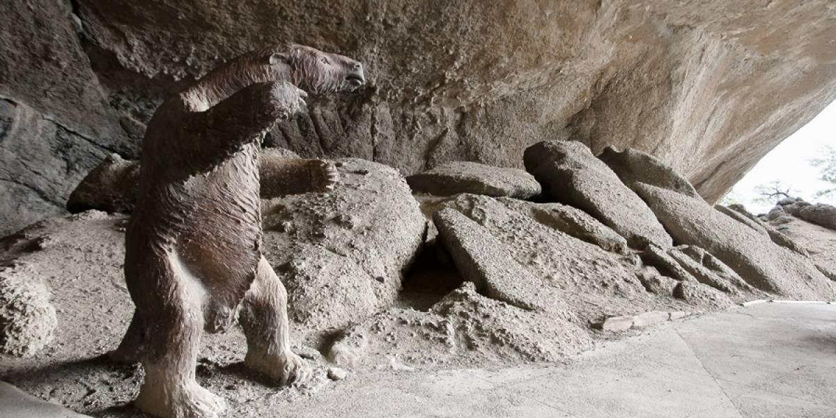 Chile pedirá a museo Británico devolución de restos de un mamífero extinto