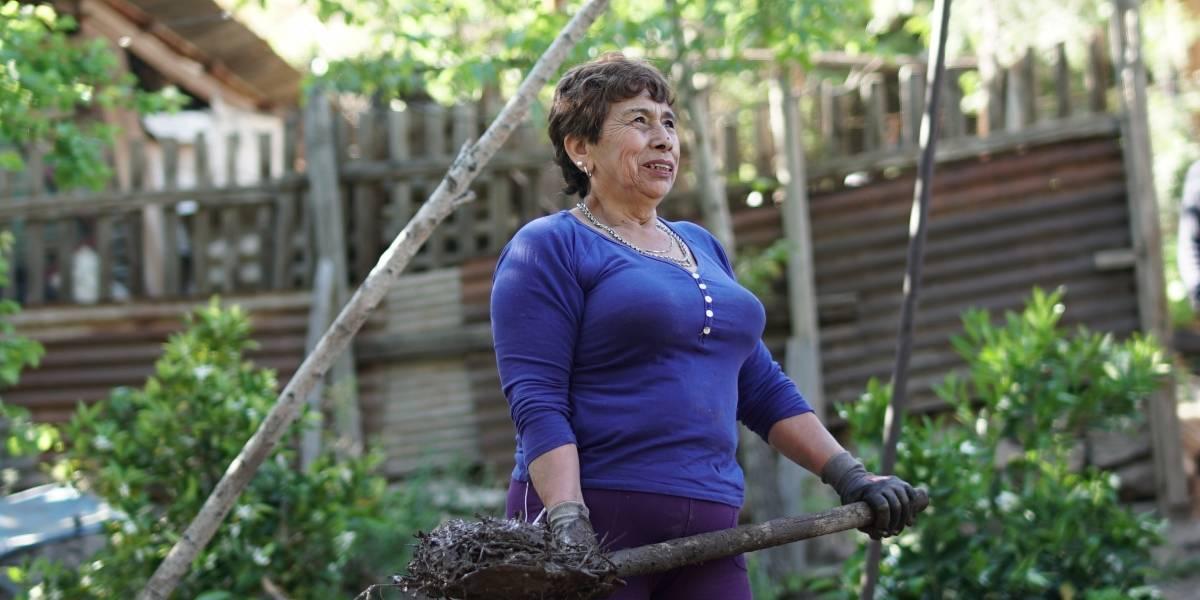 """Entre una porteña que repara casas de adobe, un colectivero solidario y capitalino que ayuda a migrantes se perfila el """"Nuevo Héroe"""" de este año"""