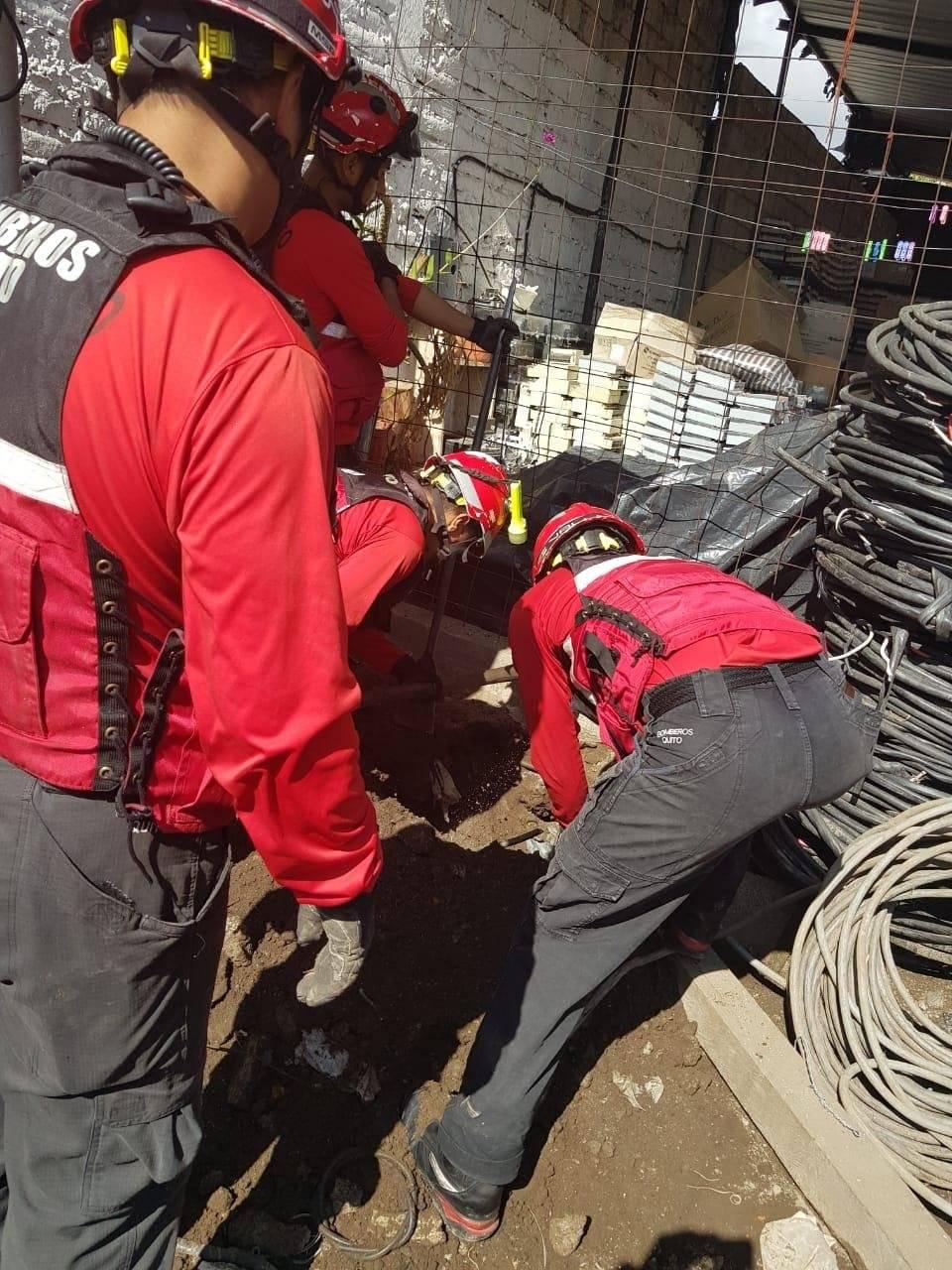 Rescate de perrita y sus cachorros