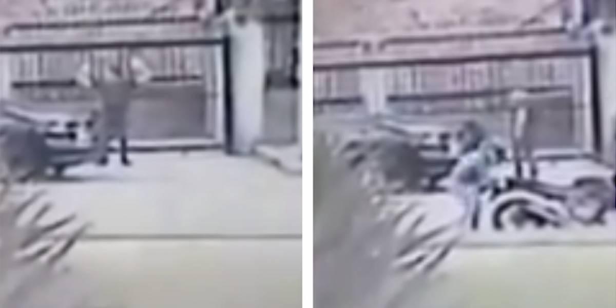 Impresionante video de robo en el norte de Bogotá