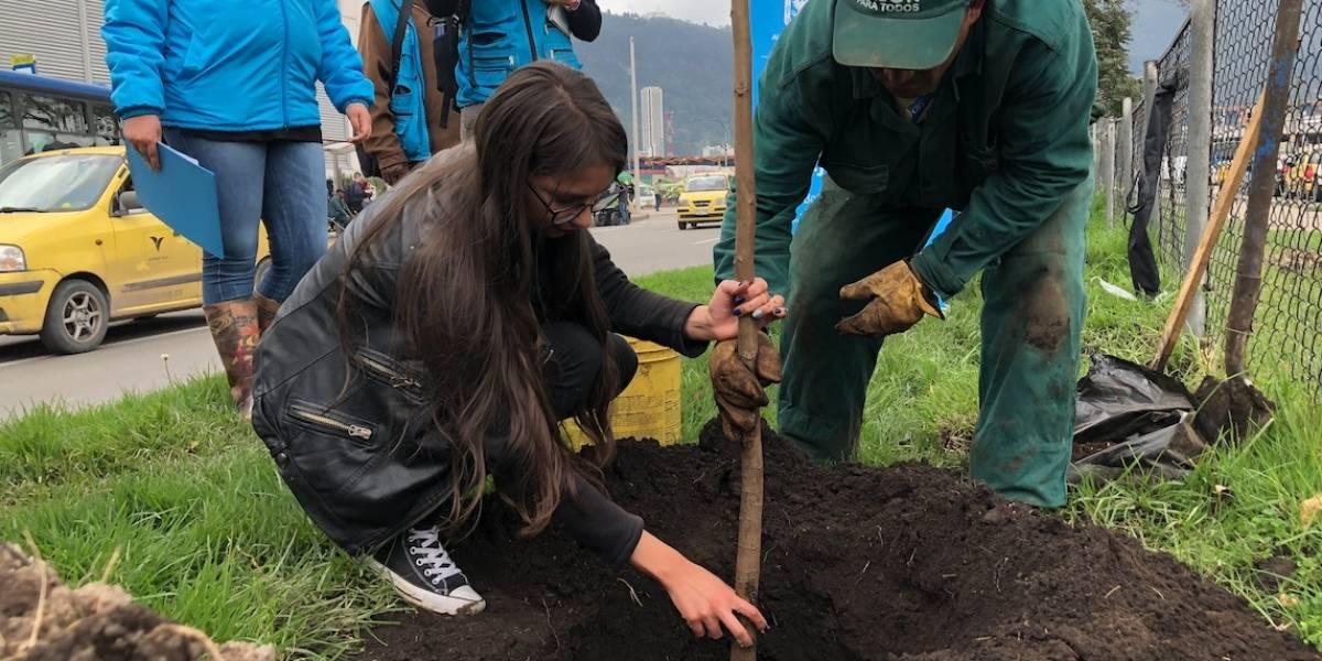 ¿Quiere plantar un árbol? Únase a la Megaplantatón en Bogotá