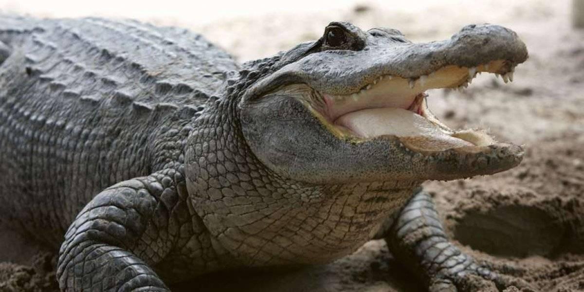 Familia de turistas golpean salvajemente con roca a cocodrilo en zoológico y lo dejan sangrando por detestable razón: querían saber si era de verdad