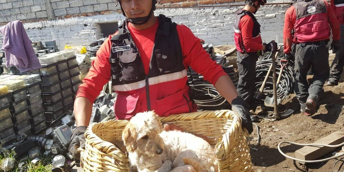 Bomberos de Quito rescataron a una perrita y sus cachorros