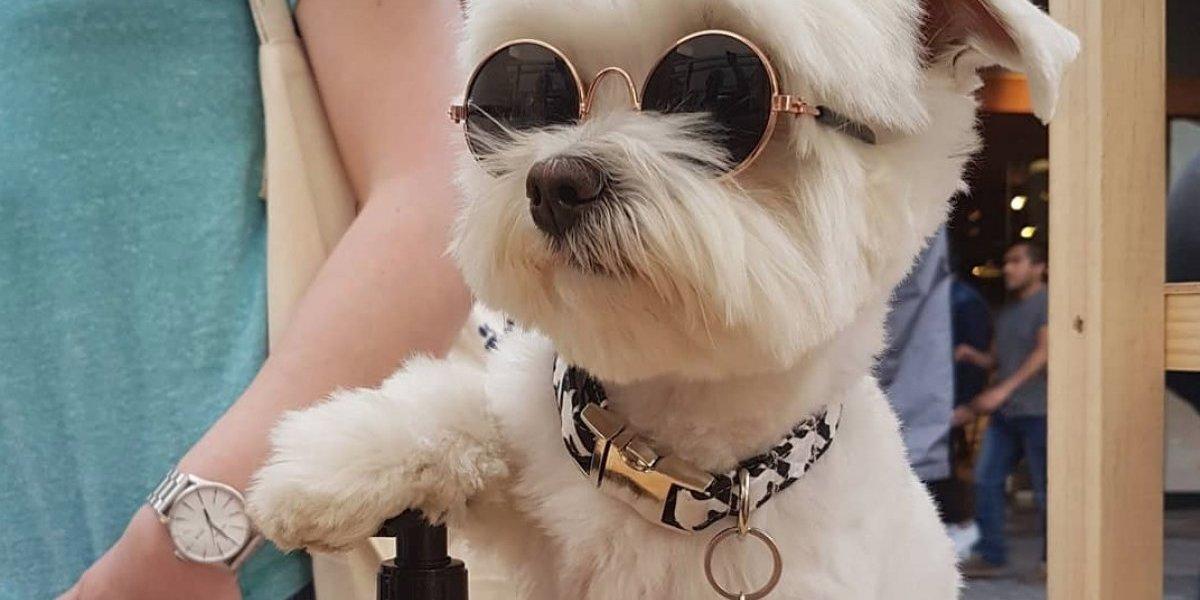 Al revés: testean productos para mascotas en personas