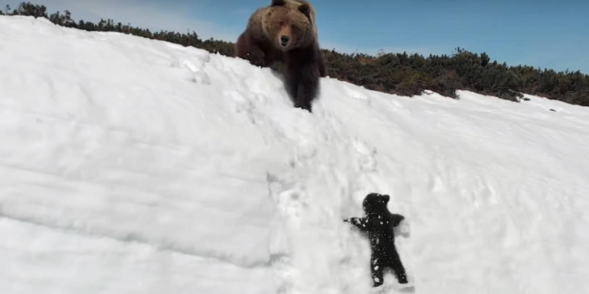 A história por trás do vídeo de ursinho tentando alcançar mãe em penhasco