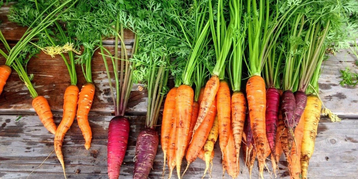 Por que comer cenouras pode fazer bem para você? Confira 9 vantagens