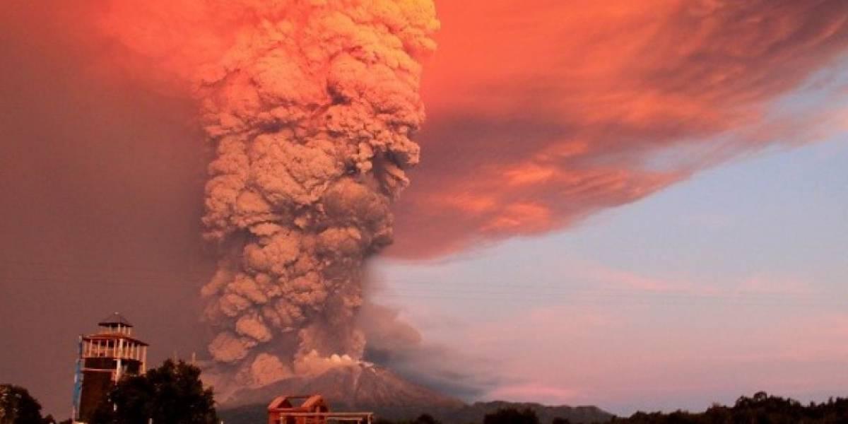Plantas nativas para restaurar suelos volcánicos: la nueva apuesta de una chilena