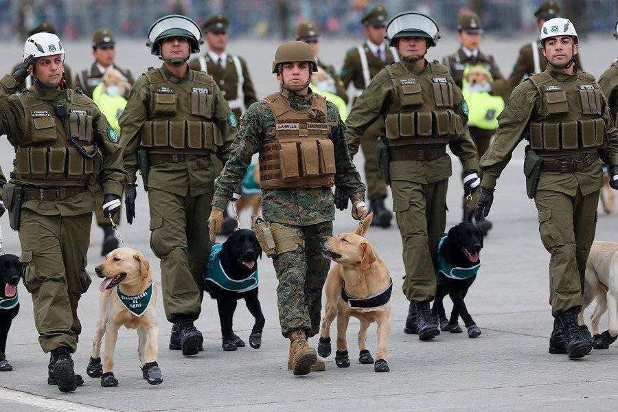 Ejemplares de la Escuela de Adiestramiento Canino en la Parada Militar de 2018