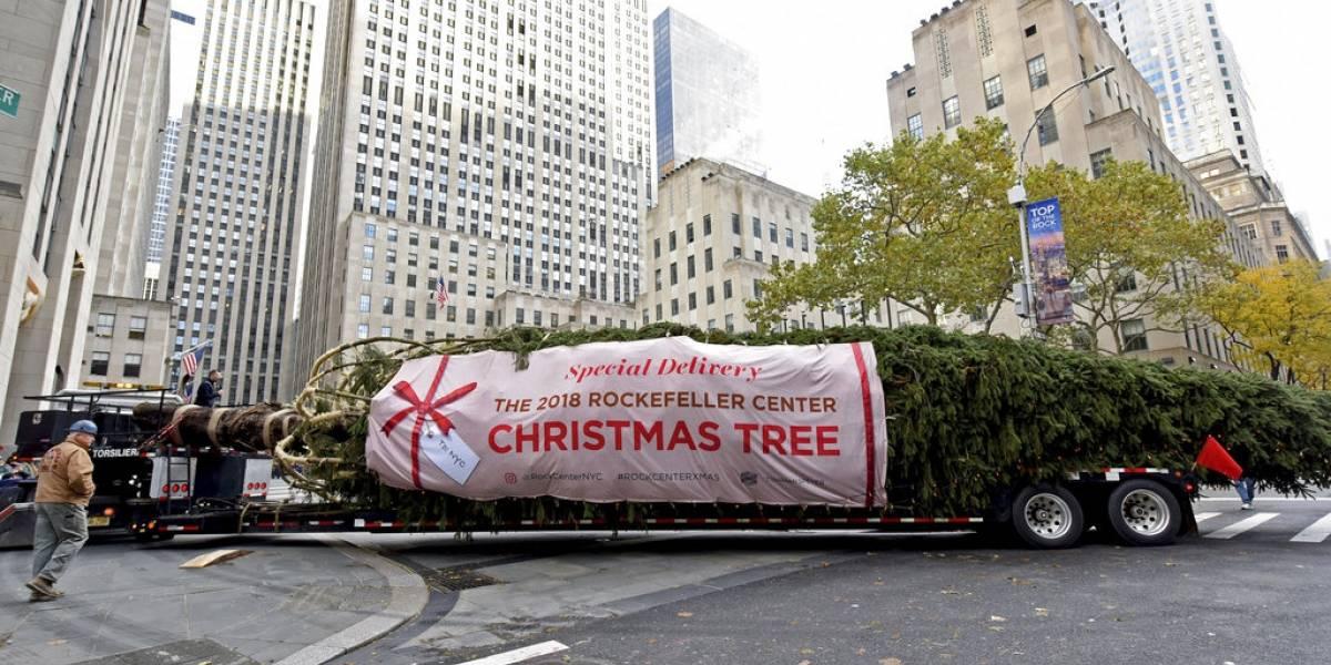 Llega el tradicional árbol de Navidad al Centro Rockefeller en Estados Unidos