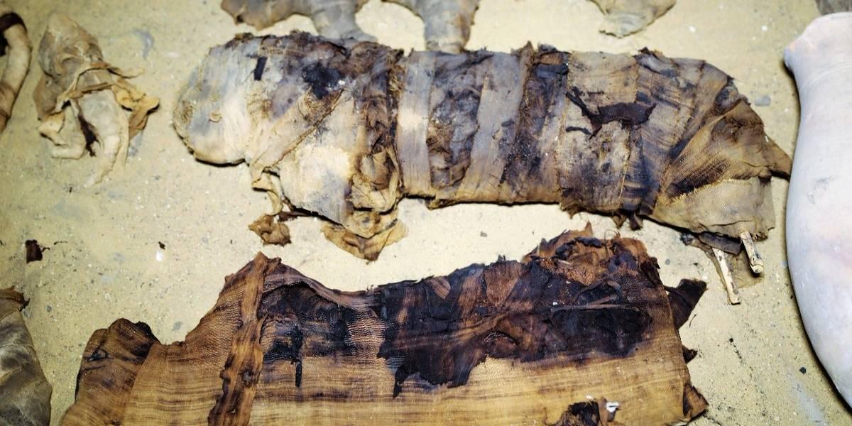 Fotos: Descubren docenas de gatos y escarabajos momificados en Egipto