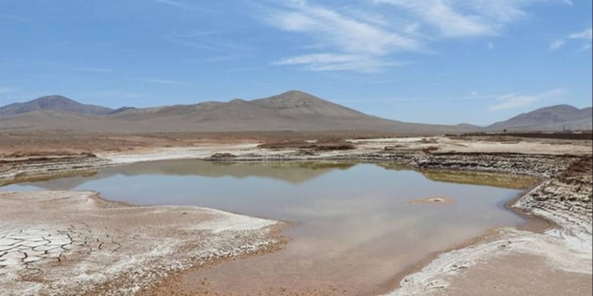 Lluvias provocan extinción de especies microbianas en desierto de Atacama
