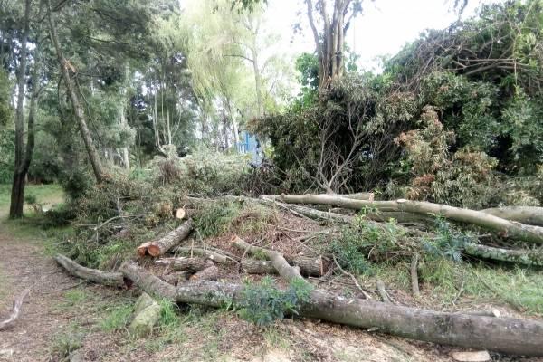 Preocupación por tala de árboles en el humedal Jaboque