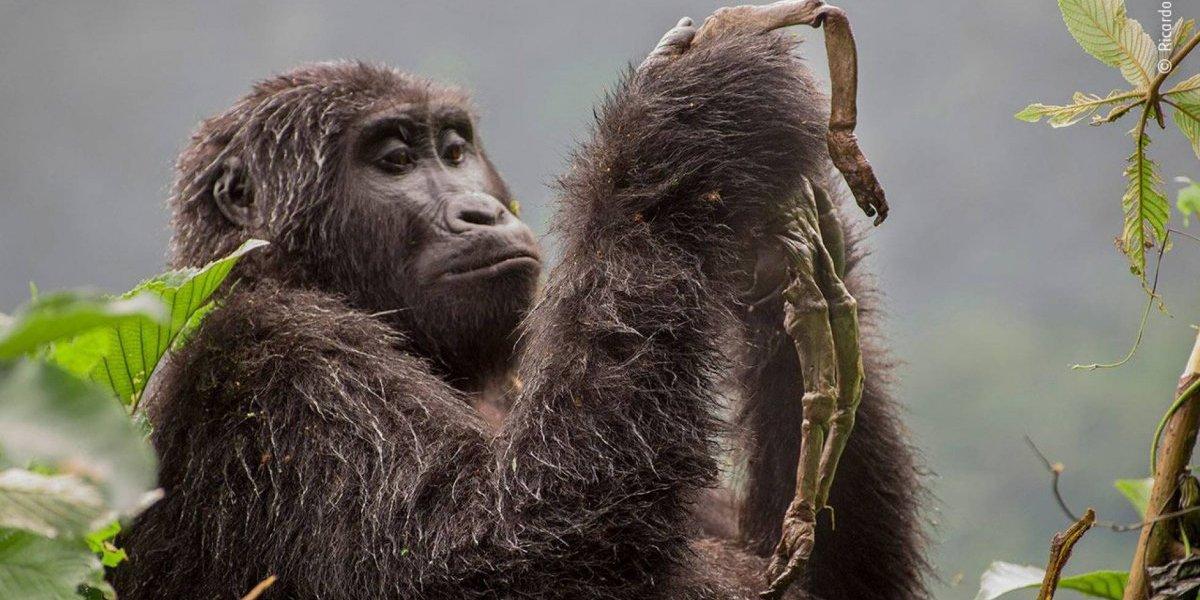 A impactante história por trás de uma das fotos finalistas do concurso 'Wildlife Photographer of the Year'