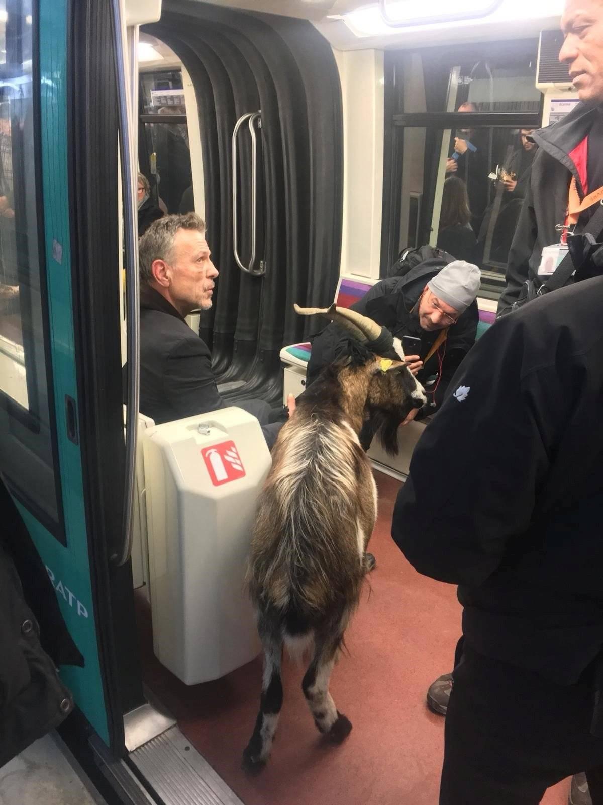 cabra metrô de paris