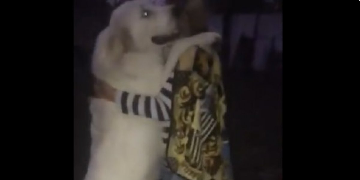Essa cachorra dança melhor que todos nós — e a internet concorda