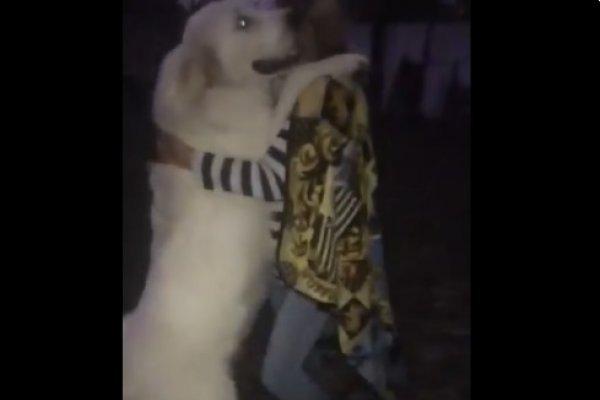 cadela dançando