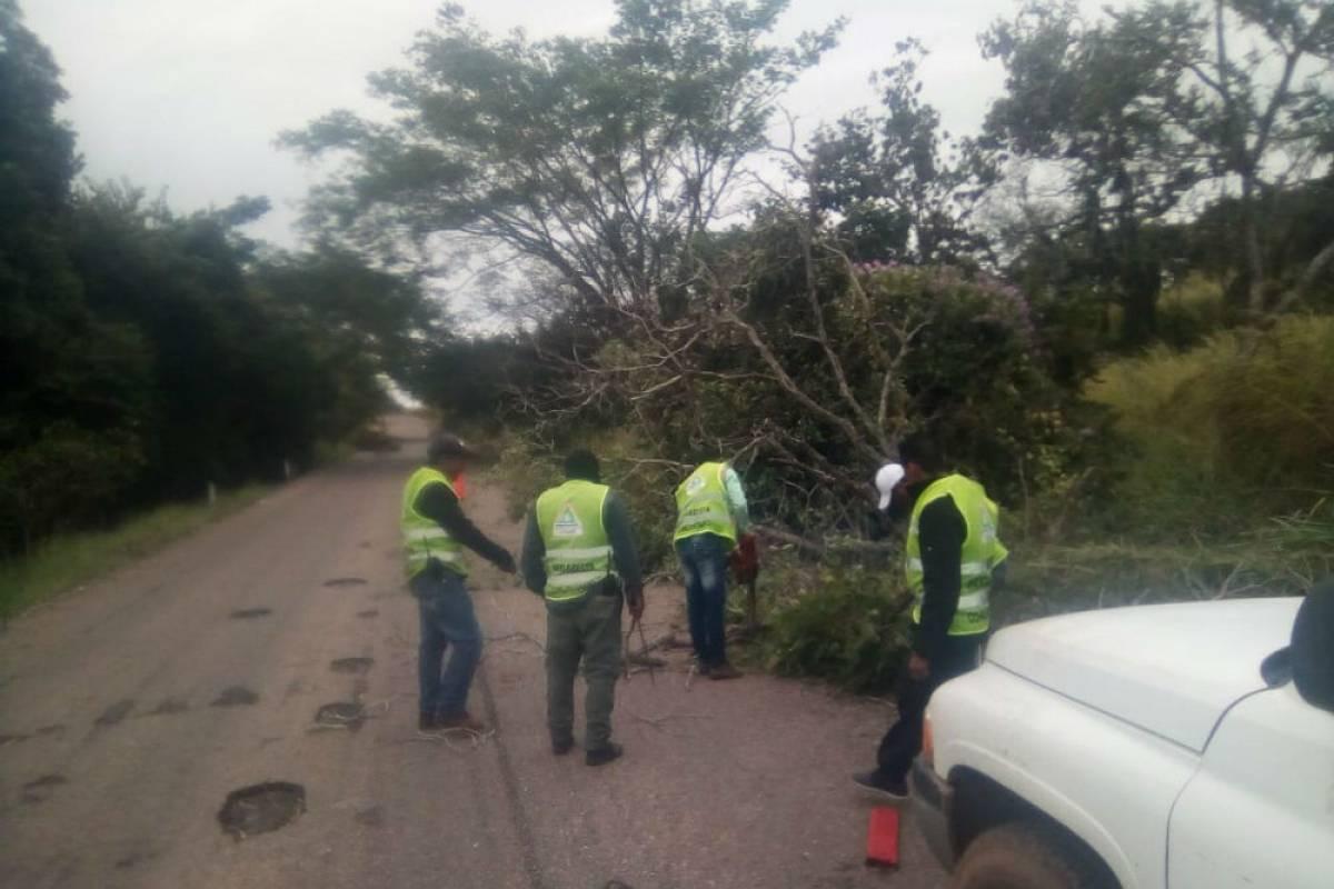 En Chiapas se registraron varios árboles caídos Foto: Twitter @pcivilchiapas