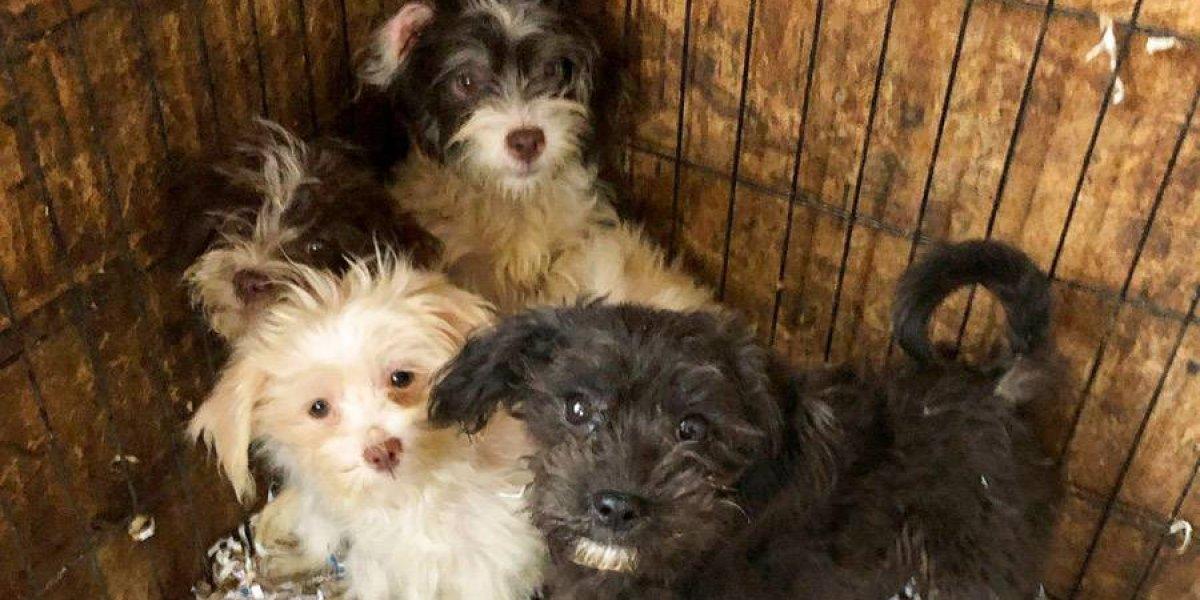 VIDEO. Mujer tenía 44 perros muertos y 130 vivos en su casa en EEUU