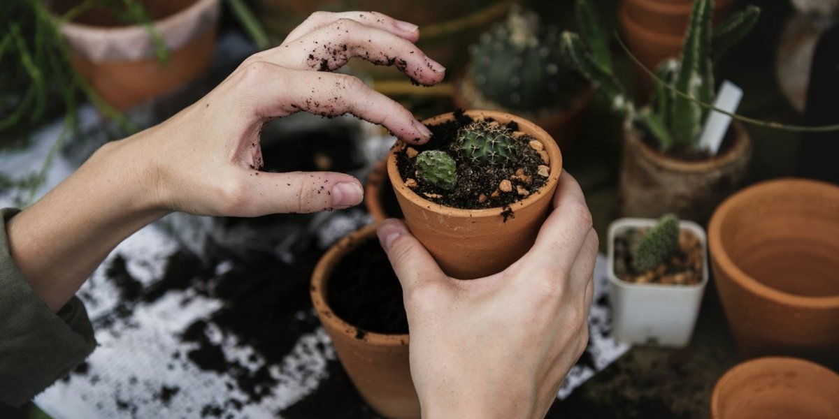 Plantas para un hogar ideal, decora de forma natural