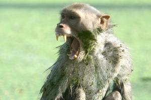 https://www.metrojornal.com.br/bbc-mundo/2018/11/15/macaco-rouba-e-mata-bebe-de-12-dias-na-india.html