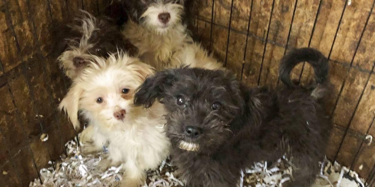 Continúan las jornadas de esterilización gratuitas para perros y gatos en Bogotá